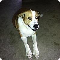 Adopt A Pet :: Payson - Concord, CA