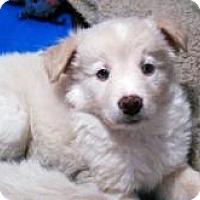 Adopt A Pet :: Polar Bear - Minneapolis, MN