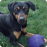 Adopt A Pet :: Bella - Tracy, CA