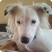 Adopt A Pet :: Tippy - Ocean Ridge, FL