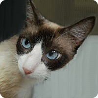 Adopt A Pet :: Fantasia - The Colony, TX