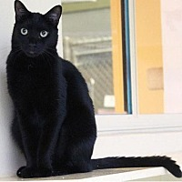 Adopt A Pet :: Jamba - Boca Raton, FL