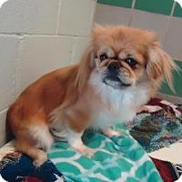 Adopt A Pet :: Mandy - LEXINGTON, KY