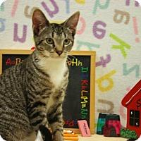 Adopt A Pet :: Wheely Tom - Bedford, TX