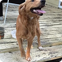 Adopt A Pet :: Astro - BIRMINGHAM, AL