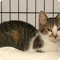 Adopt A Pet :: L. B. - Milford, MA