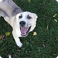 Adopt A Pet :: Phil - Mechanicsburg, PA