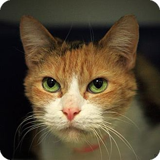 Petsmart Cats For Adoption Parma