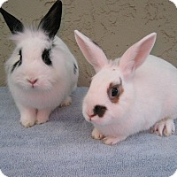 Adopt A Pet :: Gilbert & Poppy - Bonita, CA