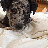 Adopt A Pet :: Rod - Grafton, WI