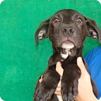 Adopt A Pet :: Fletch - Oviedo, FL