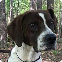 Adopt A Pet :: Argus - Spring Valley, NY