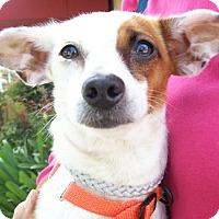 Adopt A Pet :: Adele - Castro Valley, CA