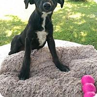 Adopt A Pet :: Anna (MD-Kelly) - Newark, DE