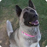 Adopt A Pet :: Aimi - Romoland, CA