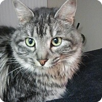Adopt A Pet :: Carmen Courtesy Post - Absecon, NJ