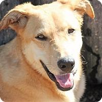 Adopt A Pet :: Spree - Jewett City, CT