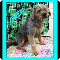 Adopt A Pet :: Owen - Oswego, IL