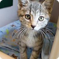 Adopt A Pet :: Elsa - Ann Arbor, MI
