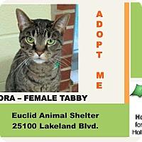 Adopt A Pet :: Flora - Euclid, OH