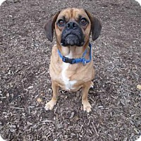 Adopt A Pet :: BOOMER - Urbana, IL