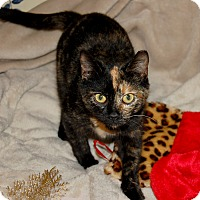 Adopt A Pet :: BK - McCormick, SC