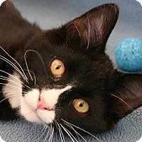 Adopt A Pet :: King VALENTINE'S SPECIAL! 50% - Republic, WA