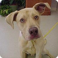 Adopt A Pet :: Fields - Aurora, IL