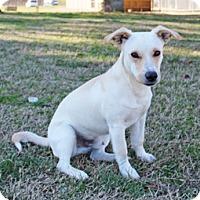 Adopt A Pet :: Nixon - Savannah, TN