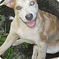 Adopt A Pet :: Caspien - Sarasota, FL