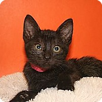 Adopt A Pet :: BAILEY - SILVER SPRING, MD