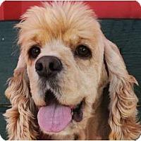 Adopt A Pet :: Romeo - Sugarland, TX