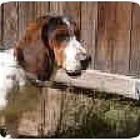 Adopt A Pet :: Stomper - Phoenix, AZ