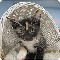Adopt A Pet :: Irma - Sterling Hgts, MI