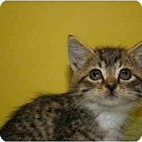 Adopt A Pet :: LIZ - SILVER SPRING, MD