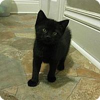 Adopt A Pet :: Misty - Acme, PA