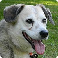 Adopt A Pet :: Zeus - Transfer, PA