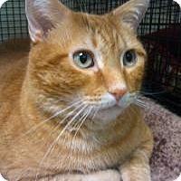 Adopt A Pet :: Yoda - Ringwood, IL