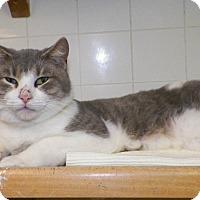 Adopt A Pet :: Pango - Dover, OH
