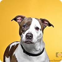 Adopt A Pet :: Angel - Blacklick, OH