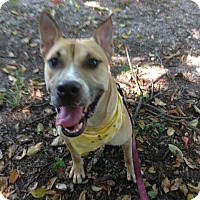 Adopt A Pet :: Maxwell - Coral Springs, FL