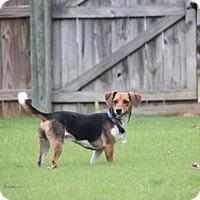 Adopt A Pet :: Benny - Homewood, AL