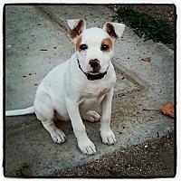 Adopt A Pet :: Miss Pretty Penny - san diego, CA