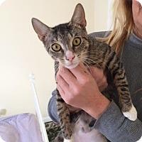 Adopt A Pet :: Jessicat - Brooklyn, NY
