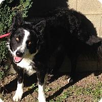 Adopt A Pet :: CURLY - San Pedro, CA