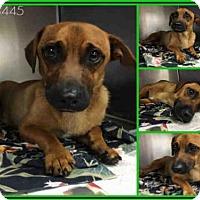Adopt A Pet :: LUCAS - San Antonio, TX