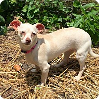 Adopt A Pet :: Thelma - Loganville, GA