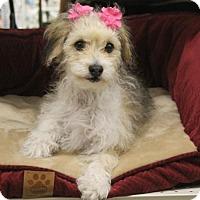Adopt A Pet :: Dippin 'Dotty' Dots - Palo Alto, CA
