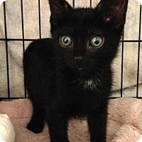 Adopt A Pet :: Bram - River Edge, NJ