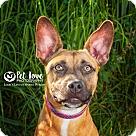 Adopt A Pet :: Ritter